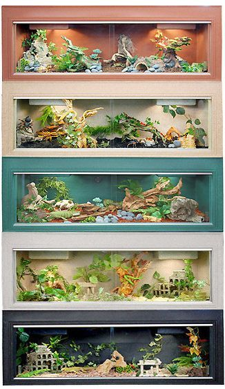Самые необычные обитатели аквариума