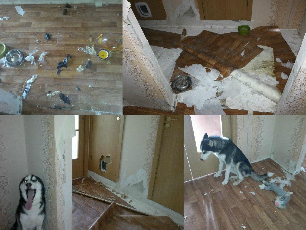 Как обустроить интерьер с домашними животными?
