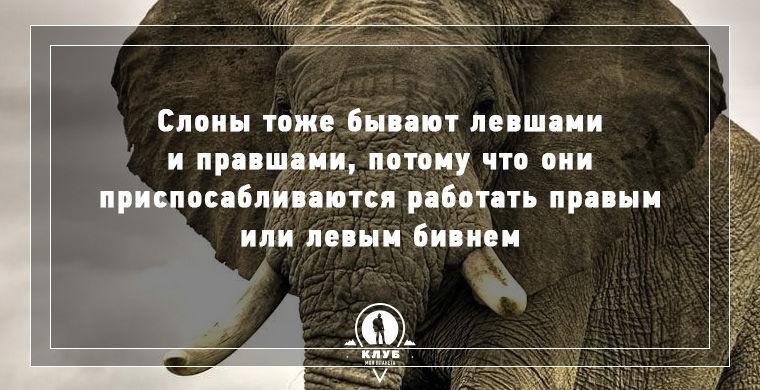 40 интересных фактов о слонах