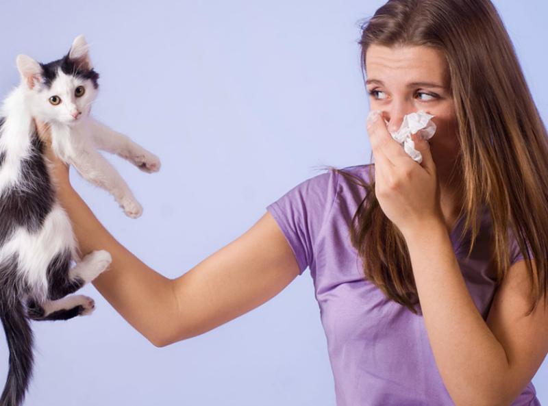 Аллергия на домашних животных - полезные советы