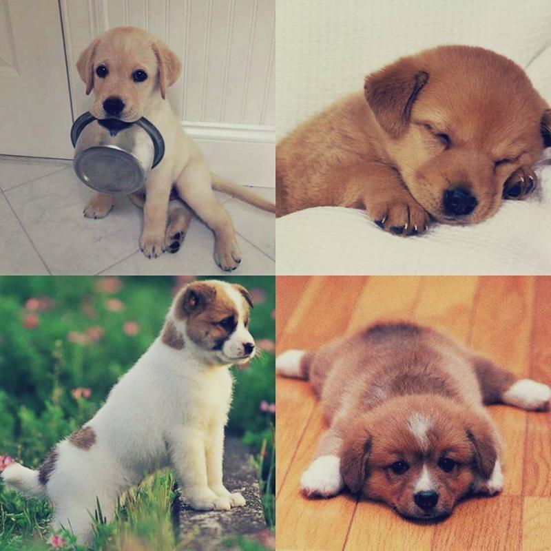 Самые дорогие собаки в мире - топ 27 пород собак с ценами и офто