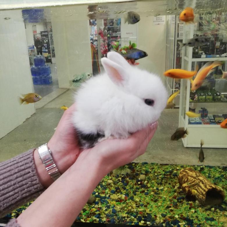 Сколько стоит декоративный кролик: цена крольчат популярных пород в зоомагазине