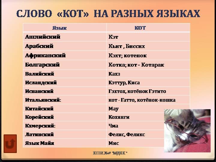Как назвать котенка: 200 кошачьих имен со значением » notagram.ru