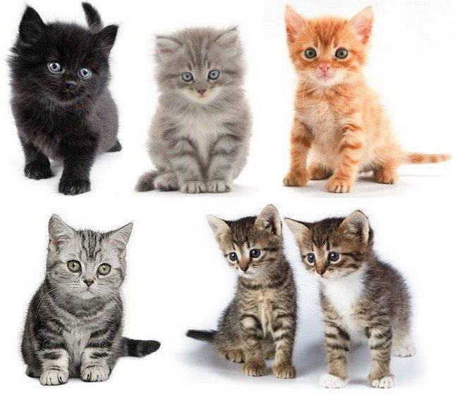 Как определить возраст котёнка в домашних условиях по размеру, весу, внешнему виду и поведению