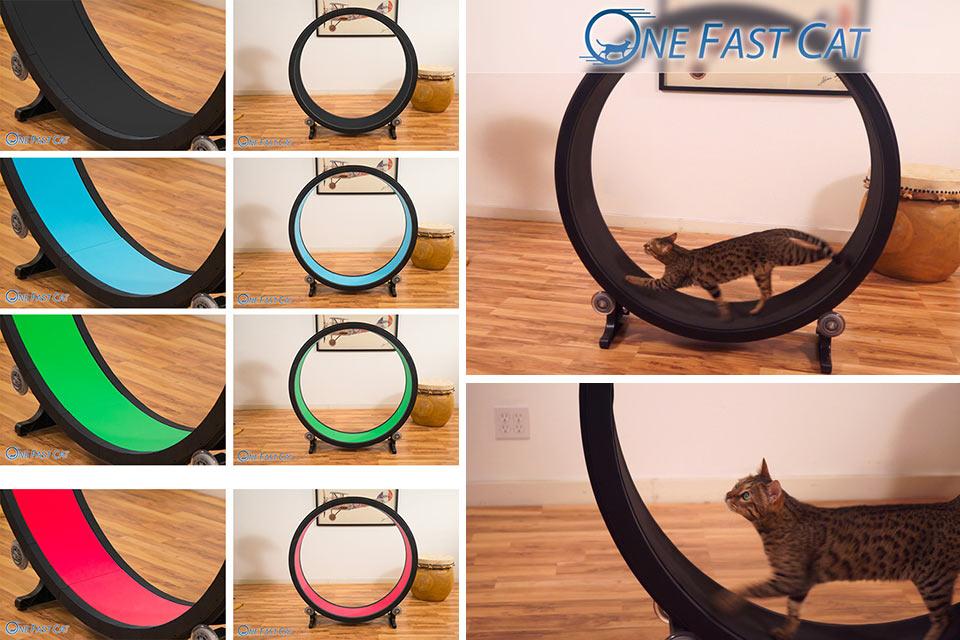 Беговые колеса для кошек: выбор и приучение