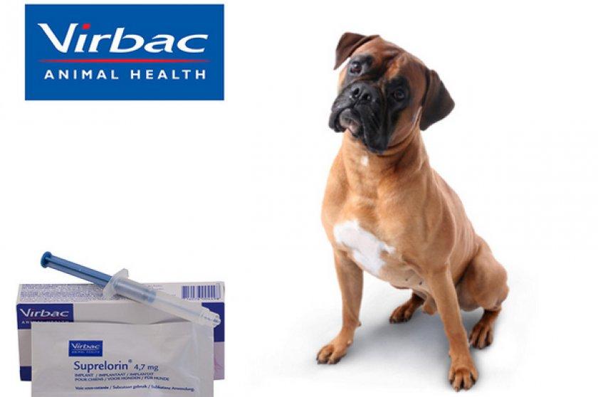 При боли и воспалении – онсиор для собак