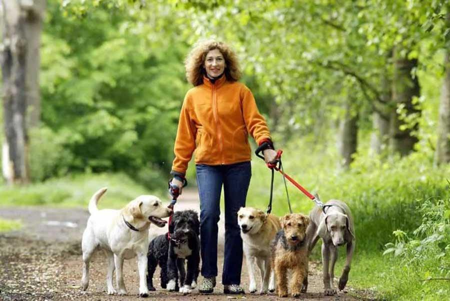 Сколько раз в день и сколько времени нужно гулять с собакой: частота и время выгула