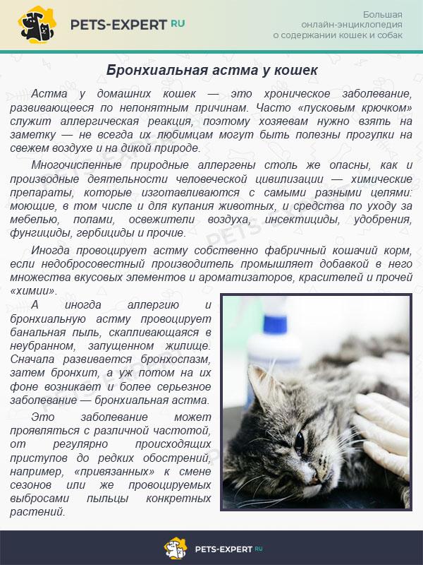 Астма у кошек: симптомы и лечение - ситивет, спб