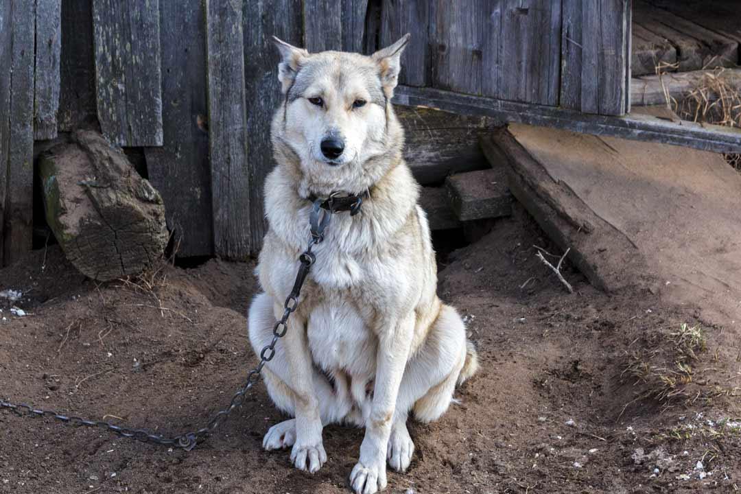Почему собаки копают ямы, землю, клумбы, грядки, подстилку, пол, в кровати, после родов, как отучить