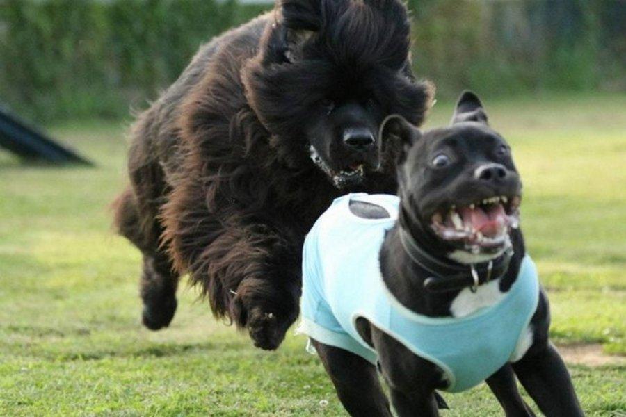33 фото самых нелепых моментов из жизни собак :: инфониак