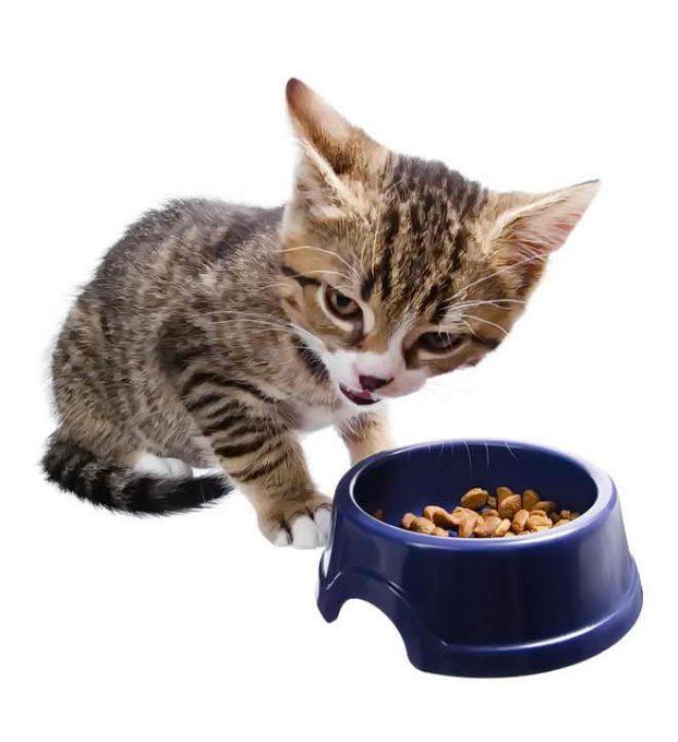 Как отучить кота (кошку) от сухого корма?