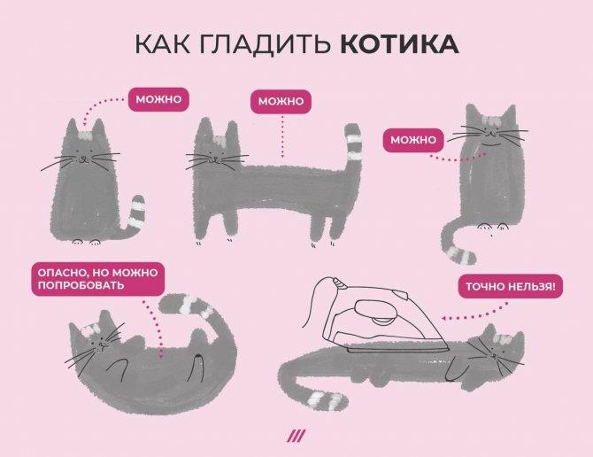 В каком месте кошки любят чтобы их гладили - oozoo.ru