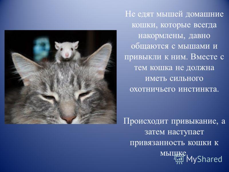 Внезапная агрессия у кошки без причины к хозяину. что делать в домашних условиях?   нвп «астрафарм»