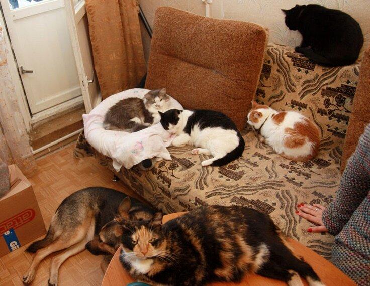 Выбираем породу кошек в квартиру для ребёнка: какая лучше