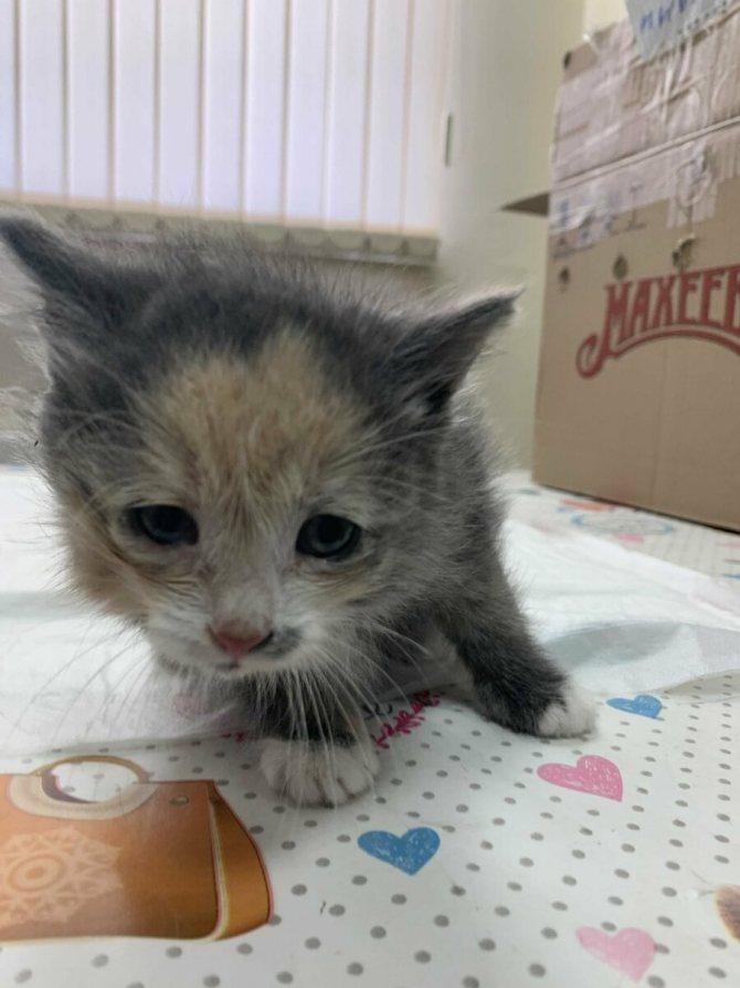 Куда отдать кошку: разнообразные приюты для питомцев и не только