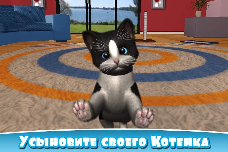 Игры с кошкой дома: как развлечь котенка