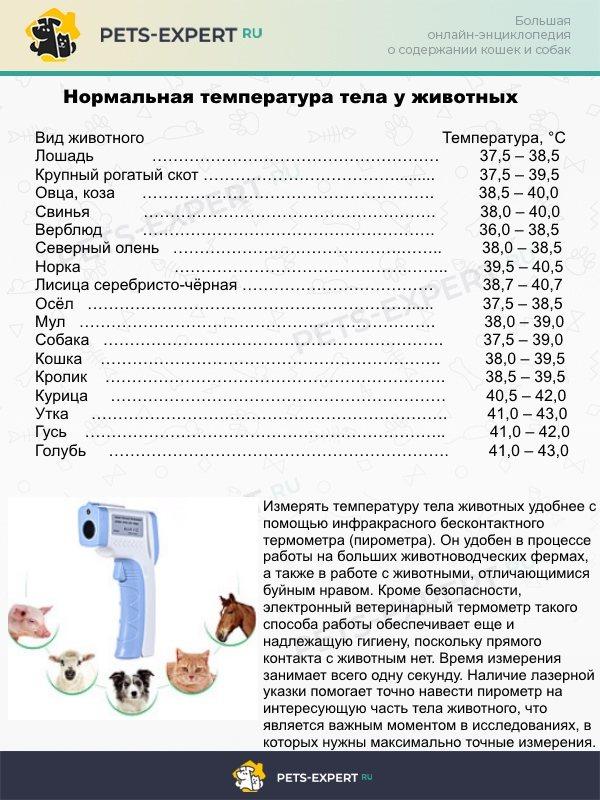 ᐉ как измерить температуру щенку? - ➡ motildazoo.ru