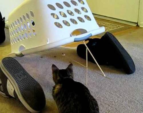 Как поймать кота или кошку: как приучить котенка к новому месту жительства, адаптация