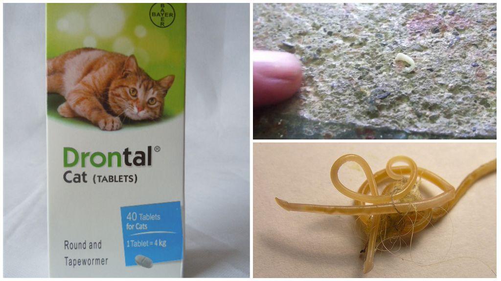 Глистогонные препараты для кошек: топ-11 лучших глистогонных