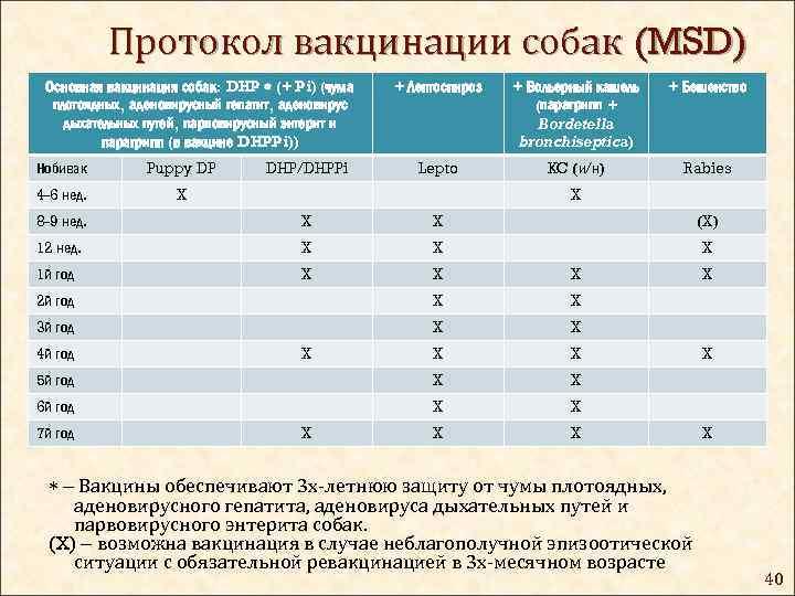 Прививки собакам по возрасту: таблица и график
