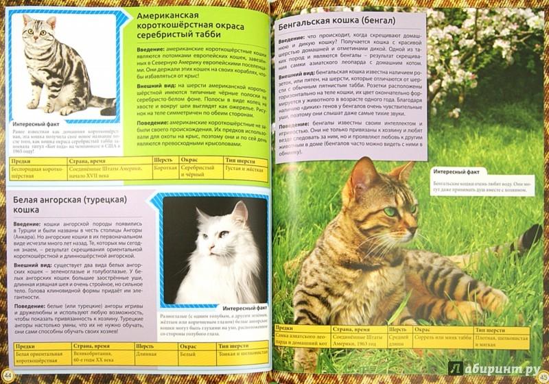 Самые милые и ласковые породы кошек - топ-30
