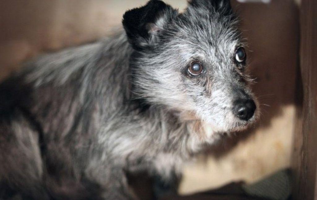 Топ-5 собак-долгожителей — от чего зависит долголетие