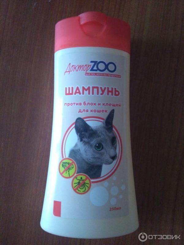 Как выбрать лучший шампунь от блох для кошек?