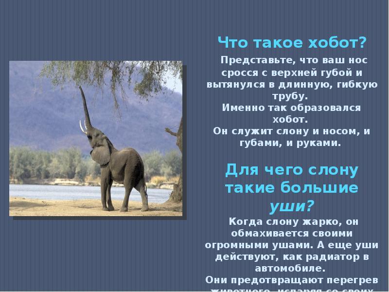 7 самых интересных фактов о слонах | русская семерка