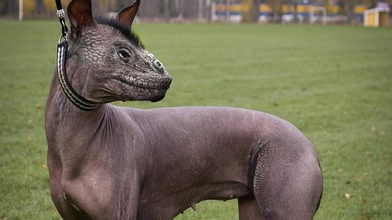 11 самых глупых пород собак