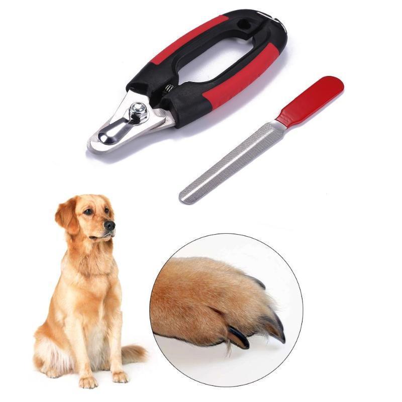 Ножницы для стрижки собак: филировочные, изогнутые, прямые, с регулировочным винтом, как выбрать и где купить
