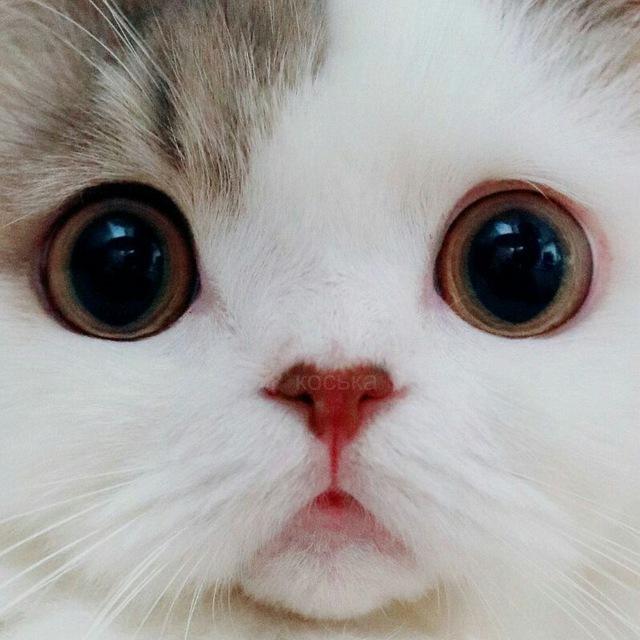 Самые красивые породы кошек в мире: топ-10 дорогих животных с фото и названиями