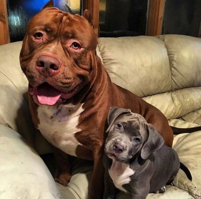 Топ неприхотливых собак для квартиры
