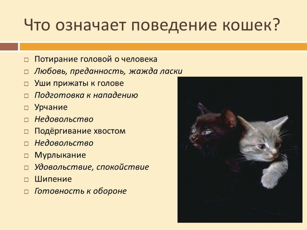 Почему кошки внезапно нападают на хозяев?