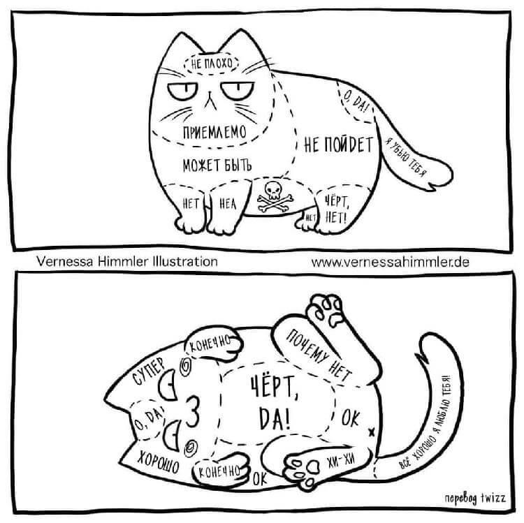 Как гладить кошку — правильные места где приятно питомцу