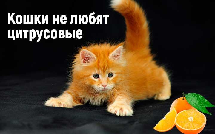 Какие запахи не любят и не переносят кошки: рекомендации, фото- и видеообзор