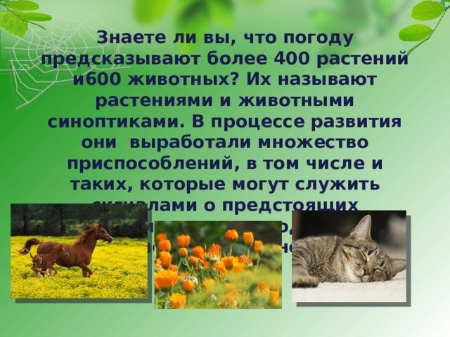 Кошки-синоптики: как узнать прогноз погоды по поведению кошки