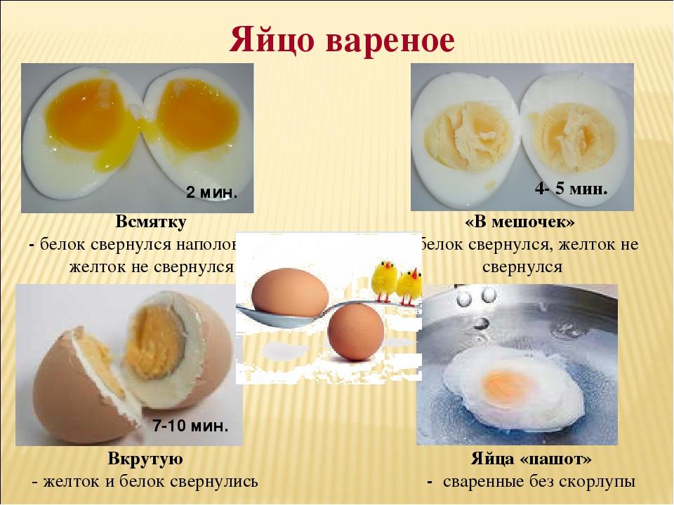 Можно ли собаке давать яйца?