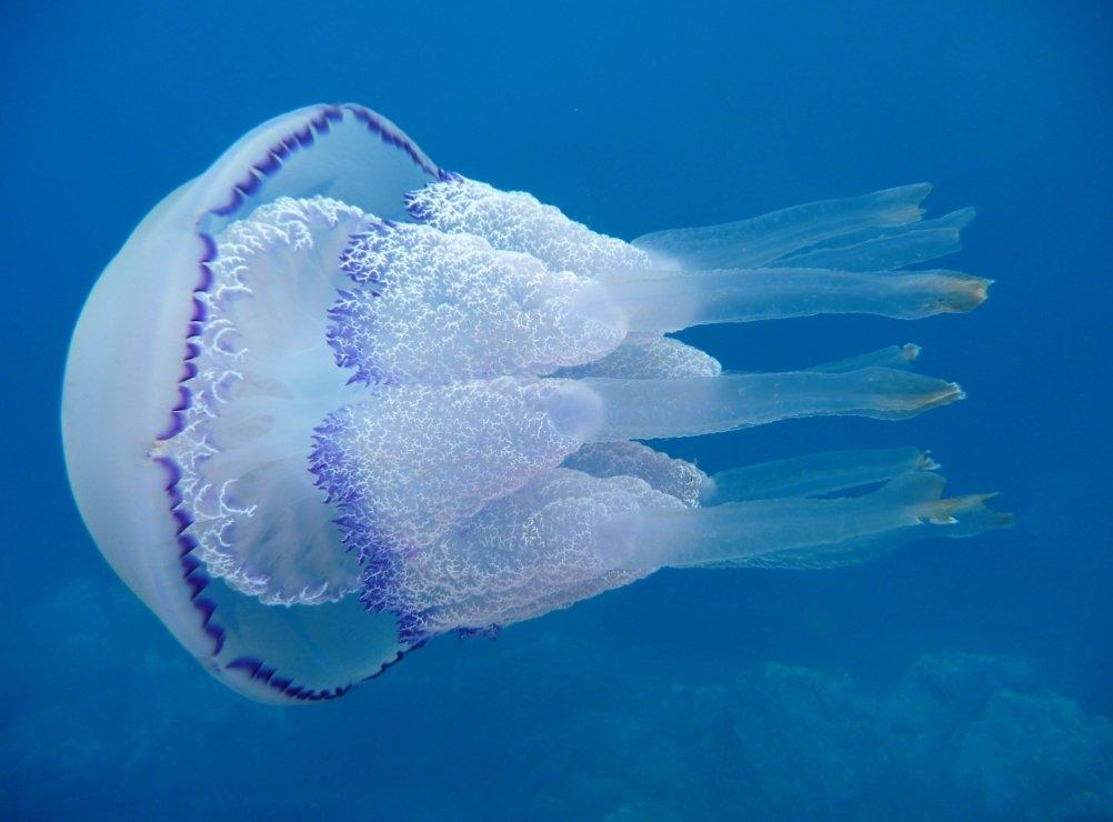 Медузы в крыму