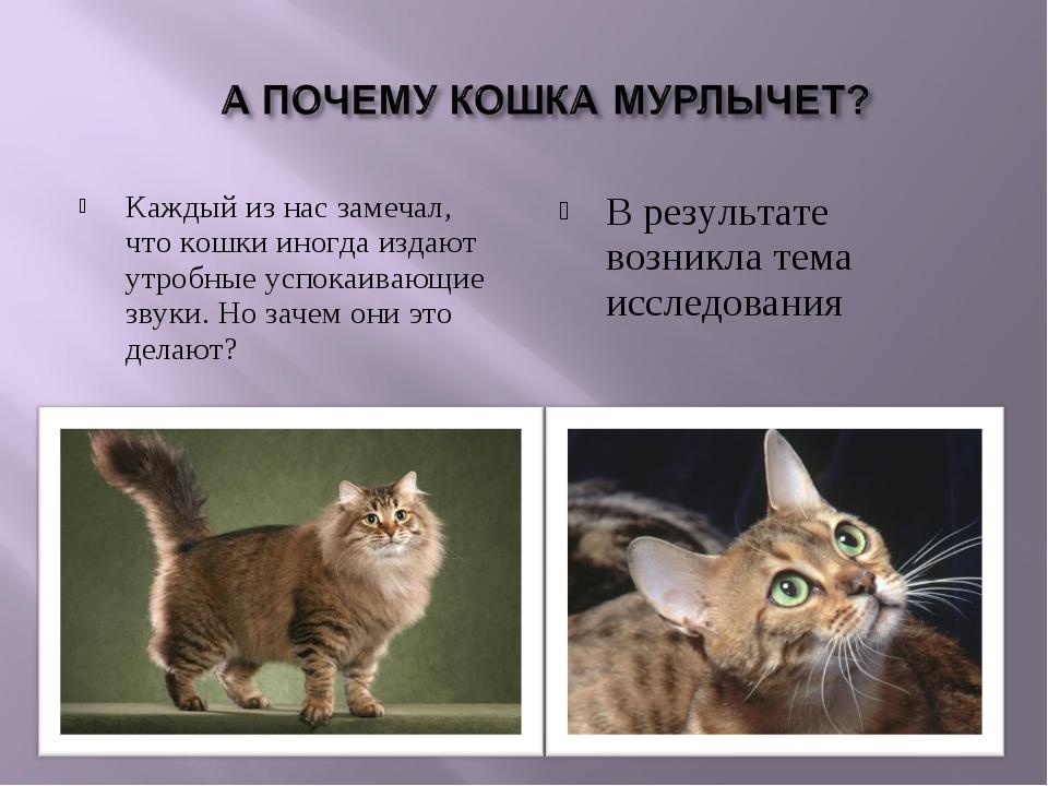Почему мурлыкают кошки - основные причины мурлыканья котов и подробное объяснение каждой из них + интересные факты о жизни питомцев