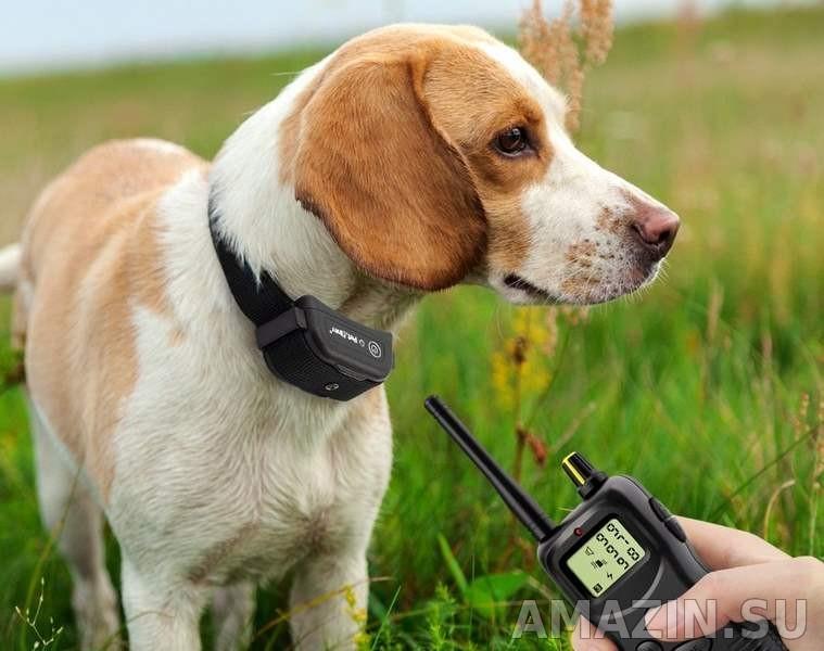Ошейник для собак: советы, как выбрать лучший ошейник в 2021 году, обзор всех моделей и производителей