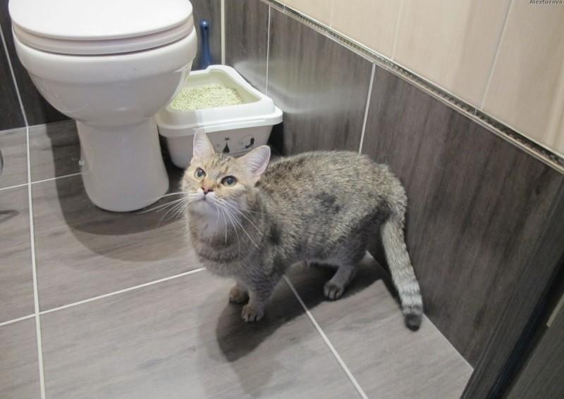 Кошка перестала ходить в лоток: что делать | почему, по большому и маленькому, причины