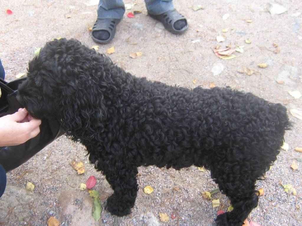 Обзор пород собак с короткой шерстью: подборка с фото