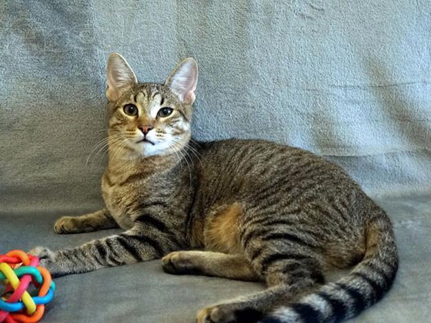 Имена и клички для котов: как назвать котенка мальчика серого, белого, чёрного, рыжего и других окрасов