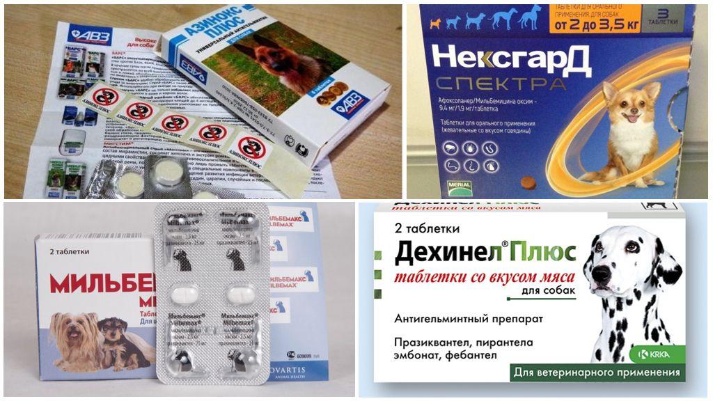 Таблетки от глистов для собак: какие лучше и как дать | petguru