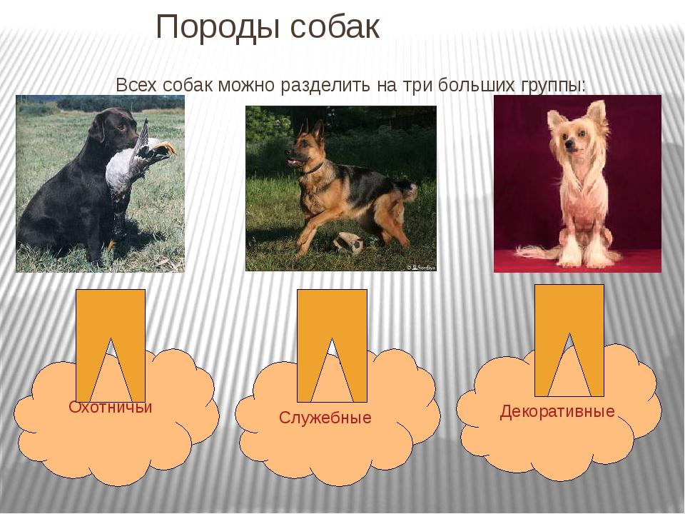 ▷ сколько собак в мире?