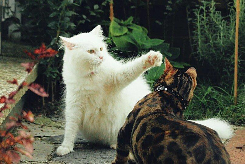Кошка стала агрессивной: главные причины «ненормального» поведения