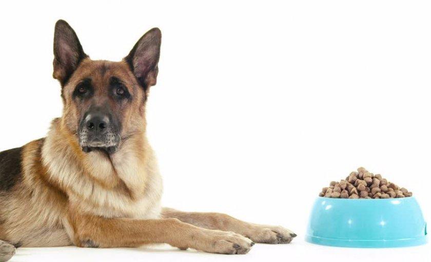 Чем кормить щенка немецкой овчарки - кормление по месяцам, рецепты, натуралка и корм
