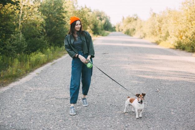 Как правильно гулять с собакой: когда кормить, что взять с собой, чем заняться