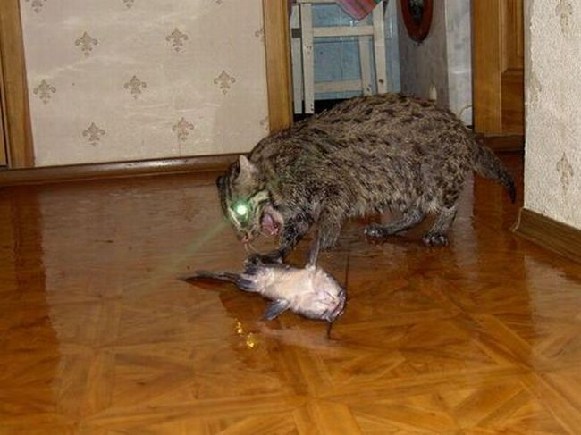 Кто лучше ловит мышей, кот или кошка: у кого сильнее развит охотничий инстинкт