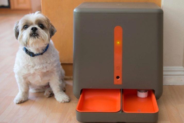 Автоматическая кормушка для кошек с таймером и дозатором: как выбрать